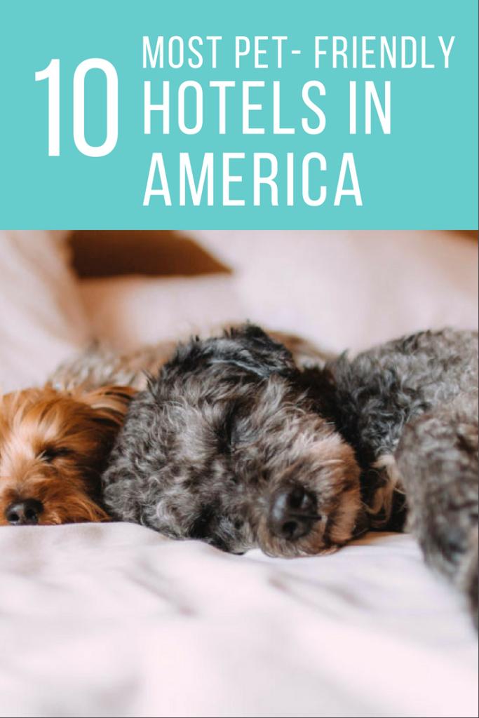 10 Most Pet-Friendly Hotels in America