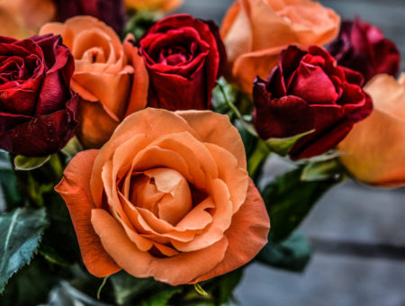 Say it With a Rose: Choosing the Right Rose Color