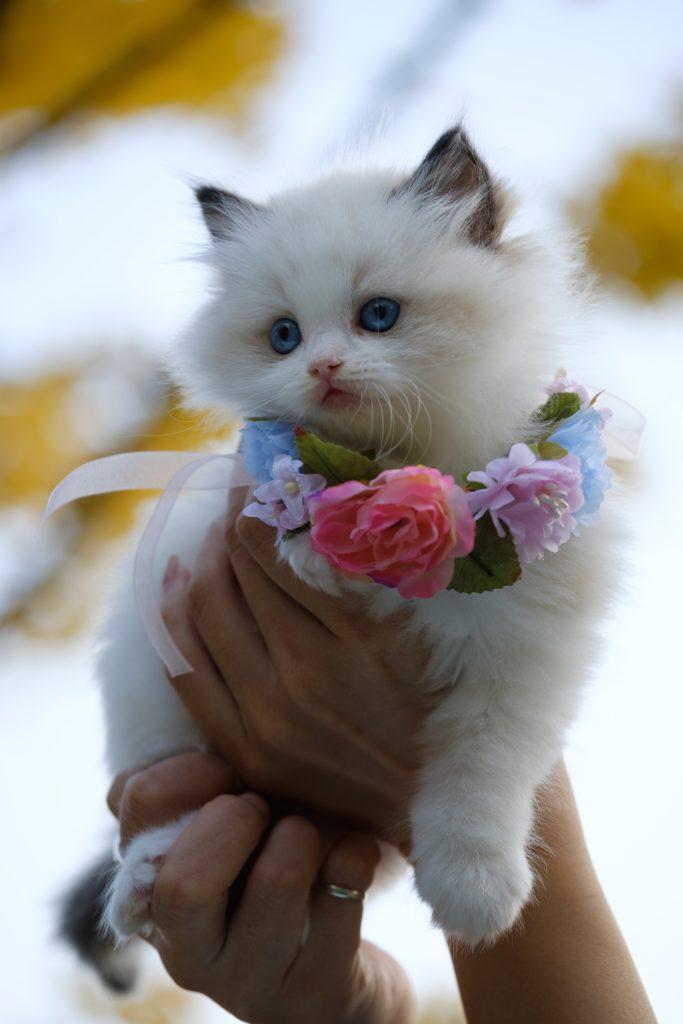 Pet Cat with Flower Necklace